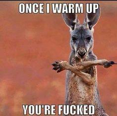 HAha #fighting #kanagroo