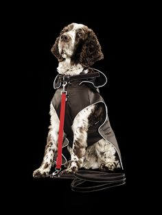 Rukka Raincoats, overalls, fleecewear, and knitwear for dogs Pet Clothes, Doggies, Knitwear, Overalls, Raincoat, Spring Summer, Pets, Fictional Characters, Style