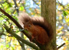 Ok, we know it's a Red Squirrel not a bird!