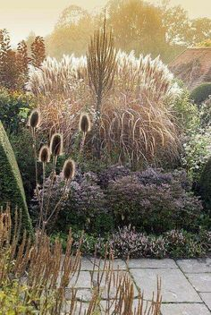 Ornamental Grasses in the Peacock Garden at Great Dixter, Northiam with Teasels, Miscanthus Sinensis Malepartus, Verbascum, Aster Lateriflorus Horizontalis and Persicaria Vaccinifolium love the planting of grasses with the backlight. Prairie Garden, Garden Cottage, Meadow Garden, Prairie Planting, East Sussex, Miscanthus Sinensis Malepartus, Pennisetum Setaceum, Science Photos, Garden Art