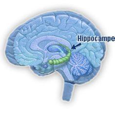 Alzheimer : l'exercice protège les personnes à risque génétique élevé   PsychoMédia