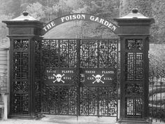 "The Poison Garden at Alnwick Gardens in Northumberland (UK). Skull and crossbones on the gates say: ""These Plants Can Kill""."