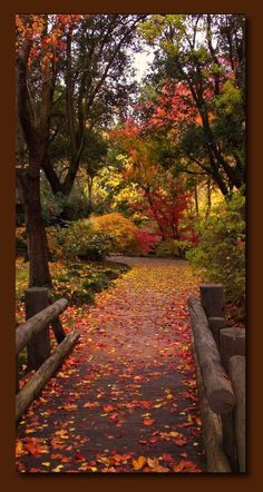 Autumn feels like My Time - I'm never so alive as when I can smell the crisp air and take in the splendor of fall foliage by glenda Fall Pictures, Pretty Pictures, Autumn Scenes, Seasons Of The Year, All Nature, Jolie Photo, Pathways, Autumn Leaves, Beautiful Landscapes