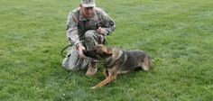 After a campaign spurred by talk-radio host Michael Savage, a wounded Army soldier was reunited after 16 months with the Czech German shepherd who helped him hunt buried explosives in Afghanistan. The Army admitted it had mistakenly allowed the dog, Matty, to be given up for adoption instead of being turned over to his handler, Spc. [...]