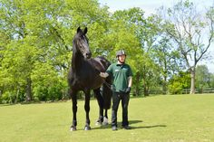 Gorgeous Cavalry Black Commando arrived at The Horse Trust in August 2012.  He retired to us from the Household Cavalry Mounted Regiment where he had served with The Blues and Royals since 2002.  He has been retired due to arthritis