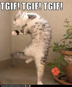 Funny Cat TGIF Meme friday happy friday tgif friday quotes friday quote friday humor funny friday quotes quotes about friday friday memes Funny Friday Memes, Friday Humor, Cat Memes, Quotes Friday, Tgif Meme, Tgif Quotes, Funny Quotes, Quotes Quotes, Zumba Quotes