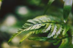 Azur and green (FaithieImages) Herbs, Child, Green, Nature, Flowers, Photography, Image, Boys, Naturaleza