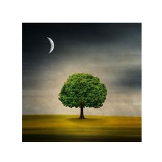 Philippe Sainte-Laudy 'Under the Moon' Canvas Art | Overstock.com Shopping - Top Rated Trademark Fine Art Canvas