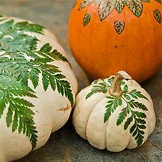 Pumpkins - Thanksgiving table? Shannon Berrey Design Blog