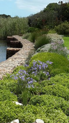 Fynbos Gardens Hermanus Landscape Maintenance, Water Wise, Flora And Fauna, Irrigation, Stepping Stones, South Africa, Beautiful Places, Outdoor Decor, Flowers
