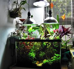 Beautiful and cheap emersed aquarium setup