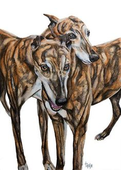 Galgo Español  Greyhounds Windhonden Whippet Dog door TanjaOnTheWall