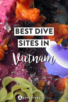 Heading to Vietnam? If you're planning your travels, why not discover the best of the underwater world at some of the best places for diving in Vietnam...