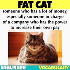 Slang / Idiom: Fat Cat