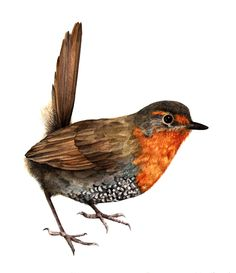 Andrea Ugarte Watercolor Pictures, Watercolor Bird, Cute Birds, Small Birds, Beautiful Birds, Animals Beautiful, Wild Photography, Art Deco Posters, Chili