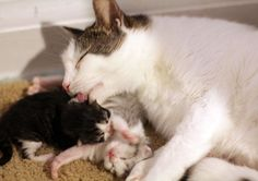 Love and Dedication from a Super Mom Cat - Love Meow