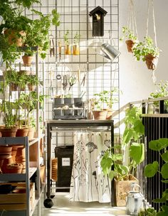 Got garden dreams in a small space? Try out a vertical garden hub with a utility cart, storage and hanging space.