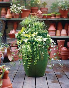 Beautiful Green container. Papyrus (the tall whispy plant). Copperhead. (big spear-shaped leaves). Lemon Chiffon (pale green clover-like). Ivy and Creeping Jenni that cascade over the sides and curly leaf parsley. #containers, #pottery, #pots, #planters