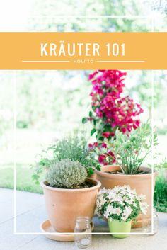 Küchenkräuter für den eigenen Garten pflanzen.  Grow your own kitchen herbs. A little how-to Kitchen Herbs, Kraut, Planter Pots, Culinary Herb