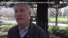 Nutrient management for grapes during drought
