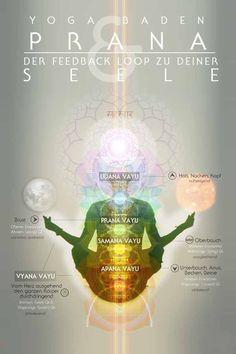 Die Dynamiken der Lebensenergie bewusst in der Asana Praxis anwenden. Heilsame, achtsame Atmung als Grundlage für einen belebenden, tiefgehenden Austausch zwischen unserem Körper und unsere Seele. #pranamayakosha #energiekörper #badenbeiwien #chiaradina