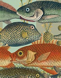 1000 images about fish shapes on pinterest fish best for Fish wrapping paper