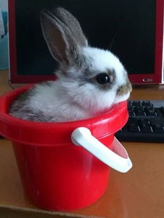 A bunny rabbit so poor, she has a bucket at her office instead of a desk chair. | 25 Animal Pictures That Will Restore Your Faith In Animals