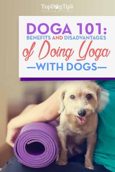 Doga 101 - Benefits and Necessary Precautions for Doing Dog Yoga. Have you ever heard of Doga? It's yoga… with dogs! And if you do know a little about Doga already, then as someone who's done it for quite some time, I'll introduce you to how you can start doing yoga with your own Fido and why you should get into Doga (or Dog Yoga) in the first place! #doga #dogs #yoga