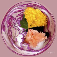 Amazing Circle - Carnations.  Copyright Nancy Kirkpatrick Photography