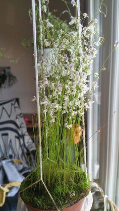 plantes carnivores conseils entretien jardinerie truffaut conseils plantes vertes d. Black Bedroom Furniture Sets. Home Design Ideas