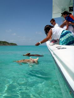 The Happy Swimming Pigs of the Big Majors Cay, Bahamas