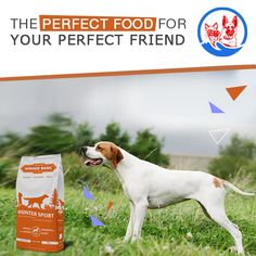 best Labrador stikers for Dog Food Online, Dog Training School, Hunting Dogs, How To Increase Energy, Perfect Food, Dog Food Recipes, Dog Cat, Pets, Animal Shelters