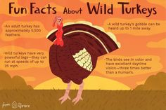 Fun Facts and Trivia About Wild Turkeys