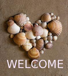 Shell Love