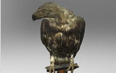 Threeding and Artec 3D to scan and digitize more than 55 endangered birds for 3D printing