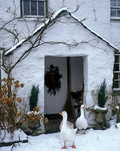 Cottage in the Snow - Let's Hope the Geese were not Christmas Dinner!
