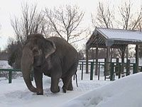 Edmonton Zoo,.Lucy was born in a tropical forest and resorted to this freezing temps