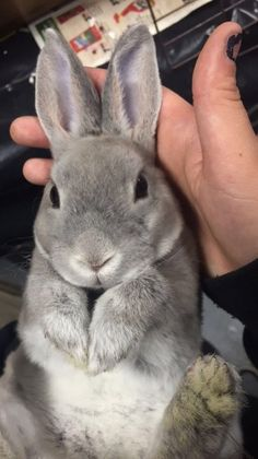 In the event you are looking for a furry companion which is not only adorable, but easy to keep, then look no further than a pet bunny. Cute Baby Bunnies, Funny Bunnies, Animals And Pets, Funny Animals, Fluffy Bunny, Cute Little Animals, Cute Animal Pictures, Cute Creatures, My Animal