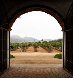 SOUTHERN COMFORTS | A view of vineyards at Adobe Guadalupe...A frequent stop when exploring the region with WineToursBaja.com
