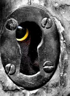 a black cat peeks through an antique keyhole