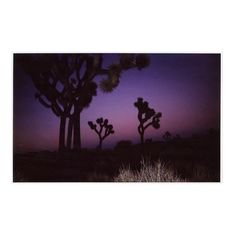 #joshuatreenationalpark photographed by @hawkeyehuey on assignment for @natgeotravel in January.