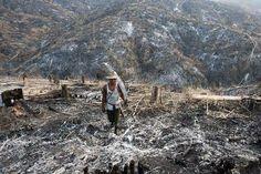Les forêts précieuses de Birmanie menacées par l'abattage - Magazine GoodPlanet Info