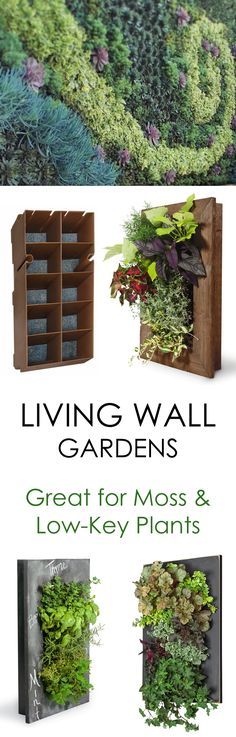 create a lush moss garden with living wall planters for extra dimension