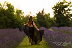 Lavender Loveliness
