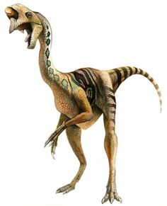 Oviraptor : Classification Règne Animalia Classe Reptilia Super-ordre Dinosauria Ordre Saurischia Sous-ordre Theropoda Super-famille † Oviraptorosauria Famille † Oviraptoridae Sous-famille † Oviraptorinae