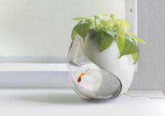 plantador com plantas de interior e pequeno aquário com peixes dourados