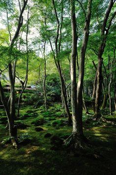 Gio-Ji, Kyoto, Japan
