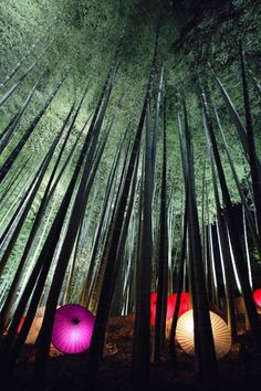 京都 嵯峨 竹林の小径 Light up at bamboo forest in Kyoto, Japan