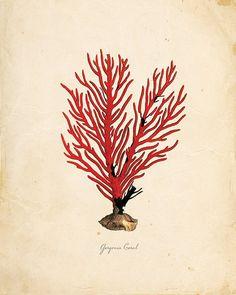 Vintage Sea Coral on Antique Ephemera Print 8x10 by OrangeTail, $14.00