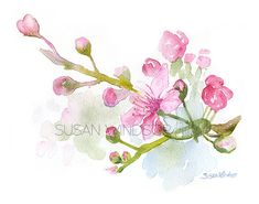 "'Cherry Blossoms' Watercolor Painting 11"" x 14""  by #SusanWindsor on Etsy♥•♥•♥"